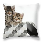 Tabby Kittens In Gift Box Throw Pillow