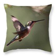 Tad Of Sunshine - Hummingbird Throw Pillow