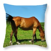Tail Swatting Flies Throw Pillow
