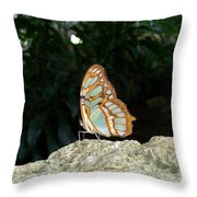Tailed Jay Butterfly1 Throw Pillow
