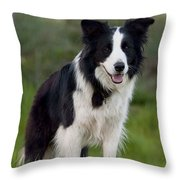 Taj - Border Collie Throw Pillow by Michelle Wrighton