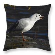 Talking Bird Throw Pillow
