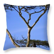 Tall Serengeti Tree And Baboon Throw Pillow
