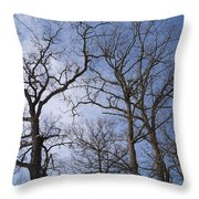 Tall Trees Reaching For A Blue Sky Throw Pillow