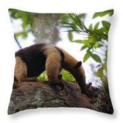 Tamandua Throw Pillow