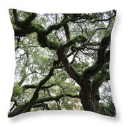 Tampa Trees Throw Pillow