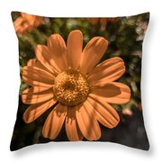 Tanacetum Painted In Red Throw Pillow