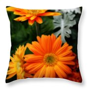 Tangerine Colored Gerbera Daisies Throw Pillow