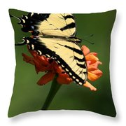 Tantalizing Tiger Swallowtail Butterfly Throw Pillow