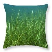 Tapegrass In Freshwater Lake Throw Pillow