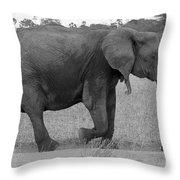 Tarangire Elephant On Road Throw Pillow