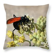 Tarantula Hawk Wasp Throw Pillow