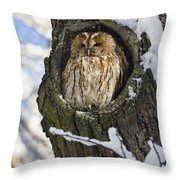 Tawny Owl Strix Aluco In Nest Hole Throw Pillow
