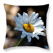 Tea Stained Daisy Throw Pillow