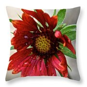 Teary Gaillardia Throw Pillow