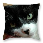 Tell Me About Your Day Throw Pillow