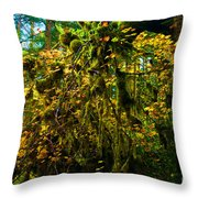 Temperate Rain Forest Throw Pillow