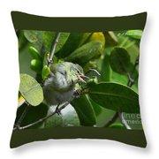 Tennesse Warbler Eating Mangrove Throw Pillow