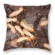Termite Nest Reticulitermes Flavipes Throw Pillow