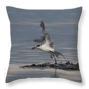 Tern Emerging With Fish Throw Pillow