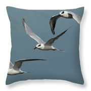 Terns In Formation Throw Pillow