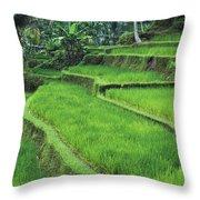 Terraced Fields Of Rice Throw Pillow