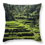 Terraced Rice Fields On Bali Island Throw Pillow