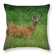 Testing The Evening Air Throw Pillow