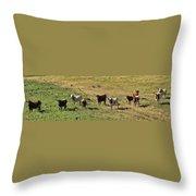 Texas Longhorns Panoramic Throw Pillow