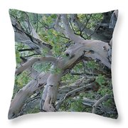 Texas Madrone Tree Limbs Throw Pillow