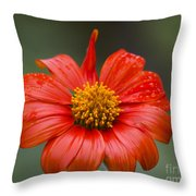 Thai Flower In Glorious Orange #2 Throw Pillow