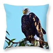 That Eagle Stare Throw Pillow