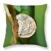 Thd Daylily Was Here Throw Pillow