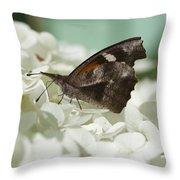 The American Snout - Libytheana Carinenta Throw Pillow