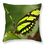 The Beautiful Color Of A Malachi Butterfly Throw Pillow