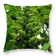 The Bee Chases The Fly? Throw Pillow