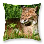 The Bobcat's Afternoon Nap Throw Pillow