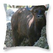 The Bull Moose Throw Pillow