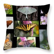 The Butterfly Collection Throw Pillow
