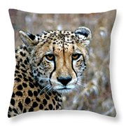 The Cheetah Stare Throw Pillow