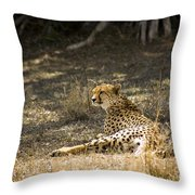 The Cheetah Wakes Up Throw Pillow