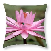 The Dragonfly And The Pink Water Lily Throw Pillow