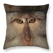 The Face Of A Long-tailed Macaque Throw Pillow