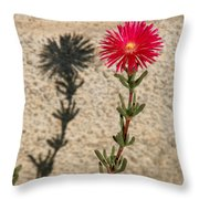 The Flower And Its Shadow Throw Pillow