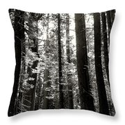 The Forest Through The Trees Throw Pillow