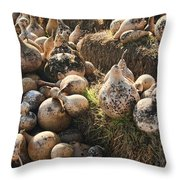 The Gourd Family Throw Pillow