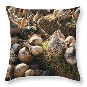 The Gourd Family Throw Pillow