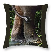 The Hindquarters Of A Malaysian Throw Pillow