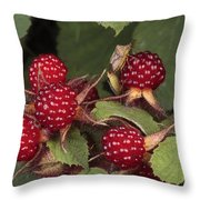 The Invasive Wine Berry And Shield Bugs Throw Pillow