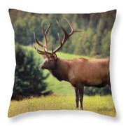 The King Of Winslow Hill Throw Pillow by Lori Deiter